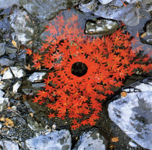 """Fall Leaves"" by Andy Goldsworthy"