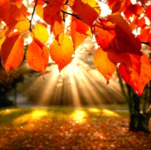 """""""...The leaves were becoming only what they had to be-- Calm, yellow, things in themselves..."""" From """"The Widening Spell of the Leaves"""" by Larry Lewis"""